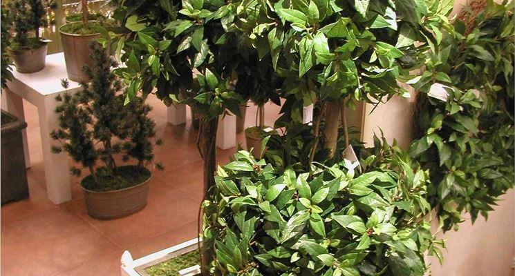 piante e fiori artificiali - Piante Finte - Piante e fiori artificiali creazioni