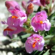 fiori finti sia