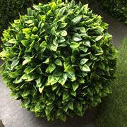 pianta finta da esterno