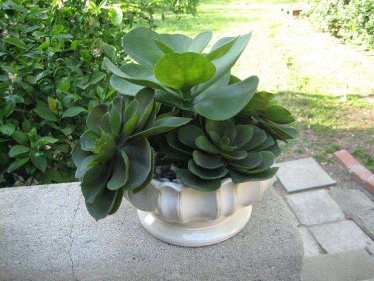 Piante grasse finte piante finte for Piante grasse ornamentali
