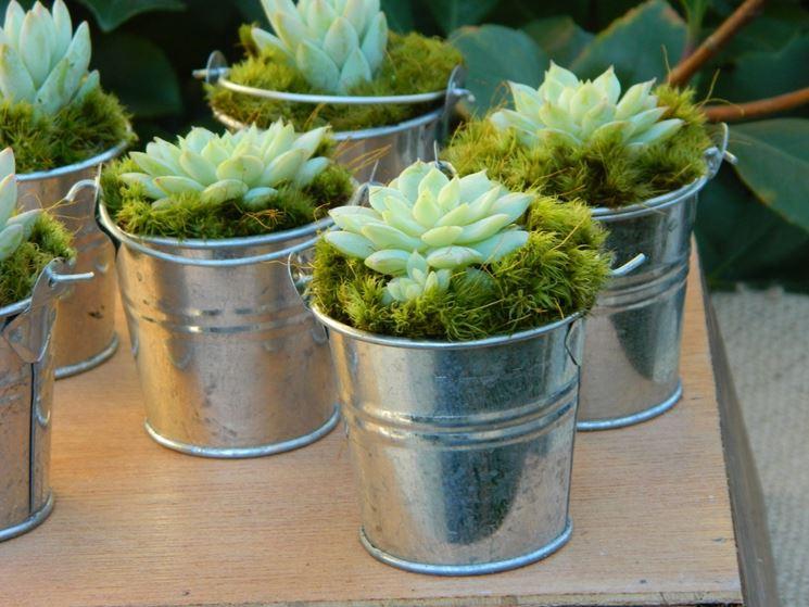 Mensole per piante grasse u idea d immagine di decorazione