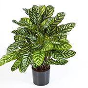 piante ornamentali finte