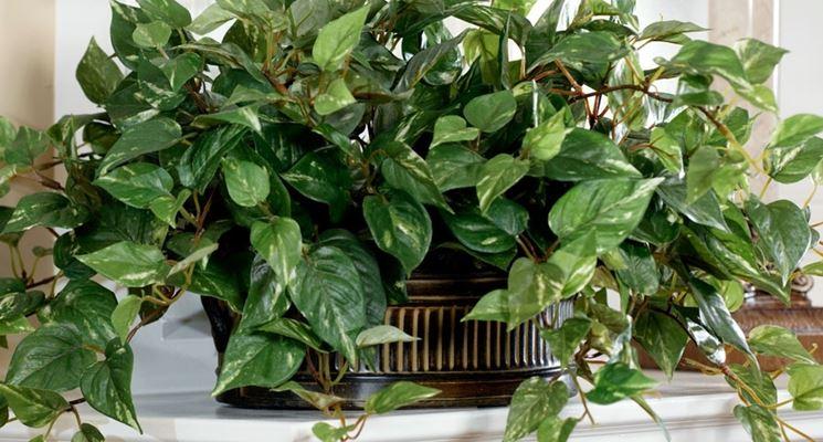 piante finte appartemanto
