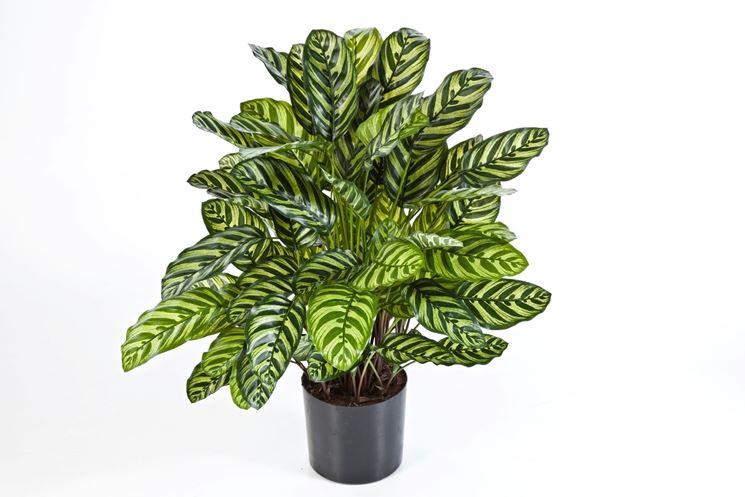Piante ornamentali finte piante finte piante finte for Siepe finta amazon