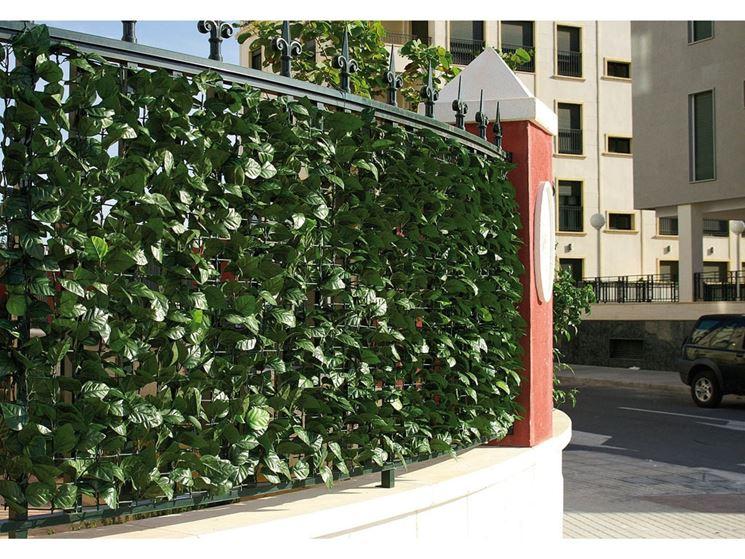 piante per siepi artificiali