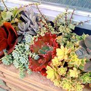 piante grasse in vasi di vetro