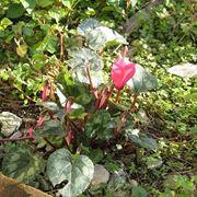 Piante grasse da esterno domande e risposte piante grasse for Piante da esterno invernali