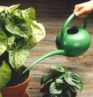 annaffiare piante da interno