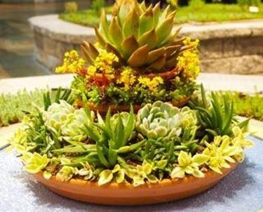 aiuole piante grasse piante grasse