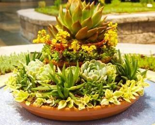 Aiuole piante grasse piante grasse for Piante da aiuola