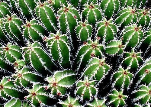 Cactus piante grasse piante grasse for Cactus piante grasse