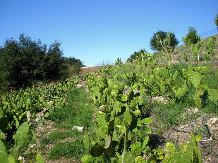 Coltivazione cactus piante grasse for Tutte le piante grasse