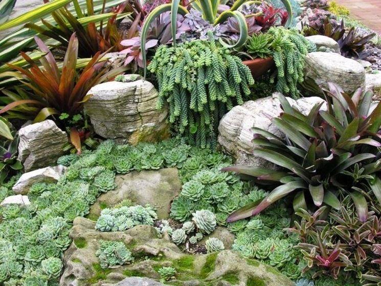 Bien-aimé Coltivazione piante grasse - Piante Grasse QN65