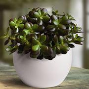 piante grasse come curarle