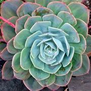 piante grasse
