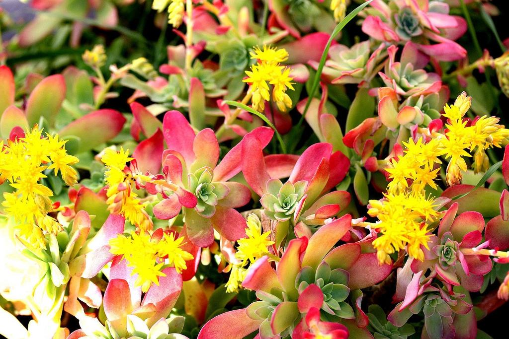 Curare piante grasse piante grasse for Tutte le piante grasse