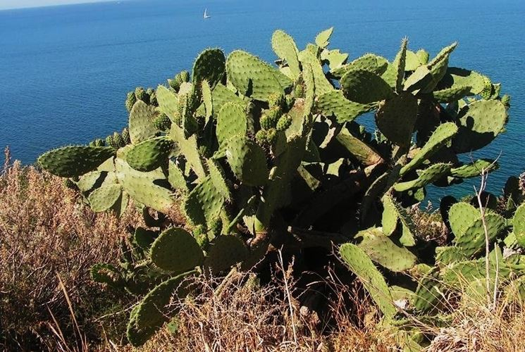 pianta Ambiente-Sardegna.it