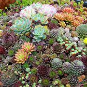 giardino piante grasse