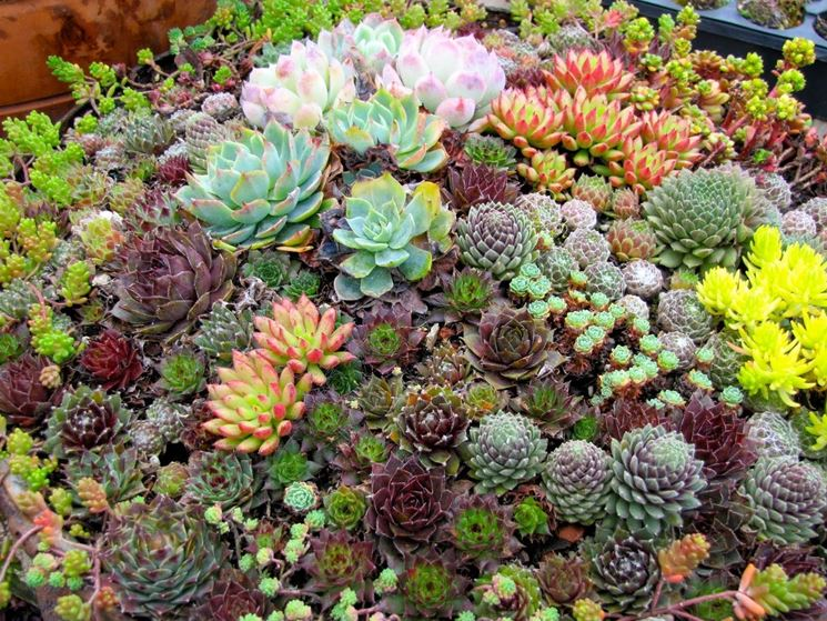 Eccezionale giardino di piante grasse - Piante Grasse MJ65