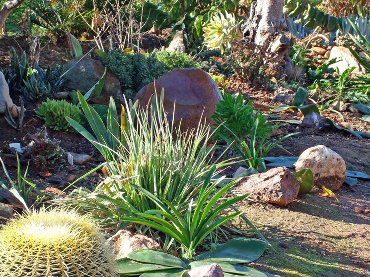 Giardino di piante grasse piante grasse - Piante x giardino ...