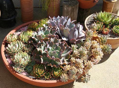 Giardino di piante grasse piante grasse for Piante grasse in giardino