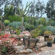 Giardino di piante grasse piante grasse for Aiuola piante grasse