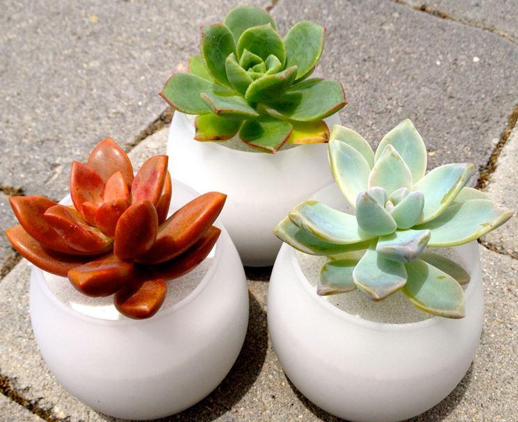 Piante grasse bomboniere piante grasse - Vasi con piante grasse ...