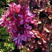 piante grasse con fiore