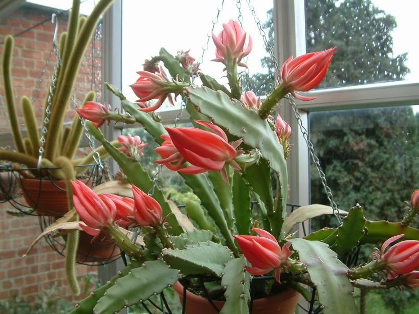 piante grasse con fiori piante grasse