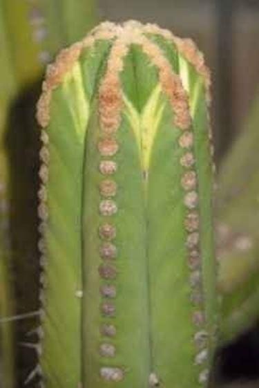 Piante Grasse Senza Spine : Piante grasse cura