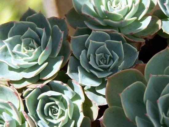 Piante grasse da appartamento piante grasse piante - Azalea pianta da interno o esterno ...