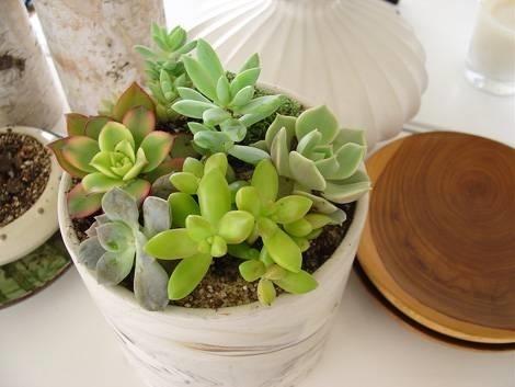piante grasse da appartamento