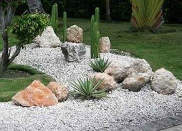 piante grasse da giardino Piante Grasse