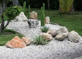 Piante grasse da giardino piante grasse - Piante grandi da giardino ...