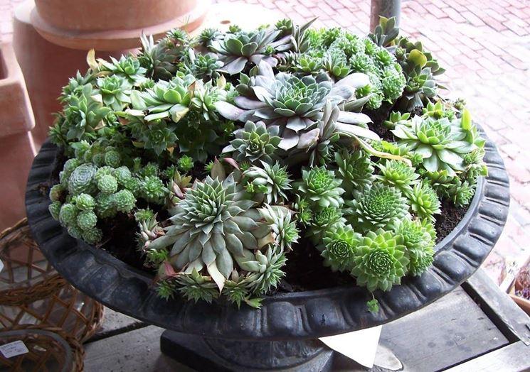 Piante grasse inverno piante grasse for Tutte le piante grasse