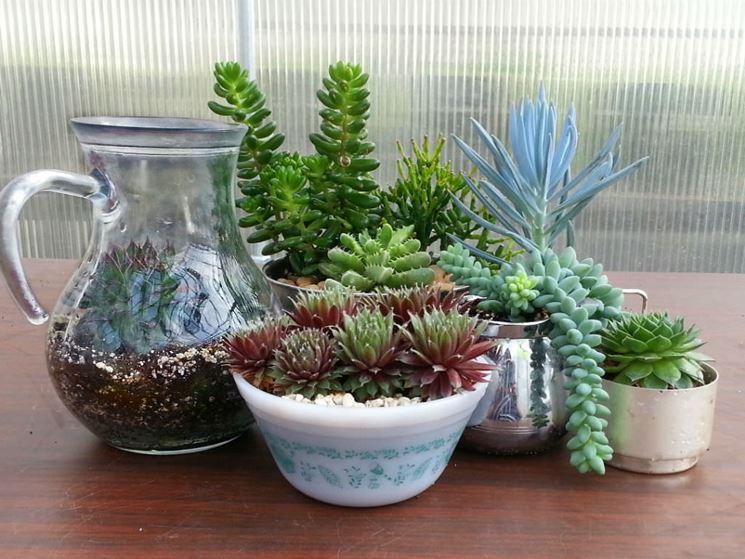 piante grasse vendita online