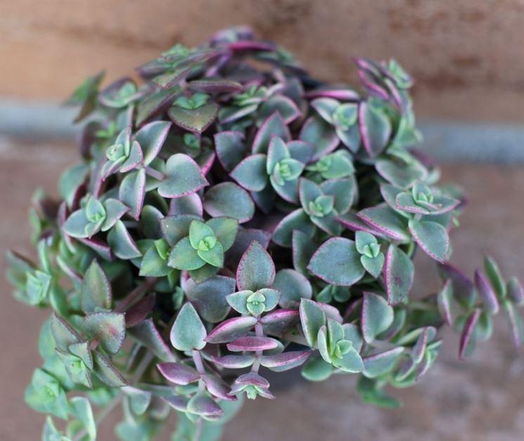 Vendita piante grasse online