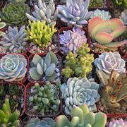 piante grasse online