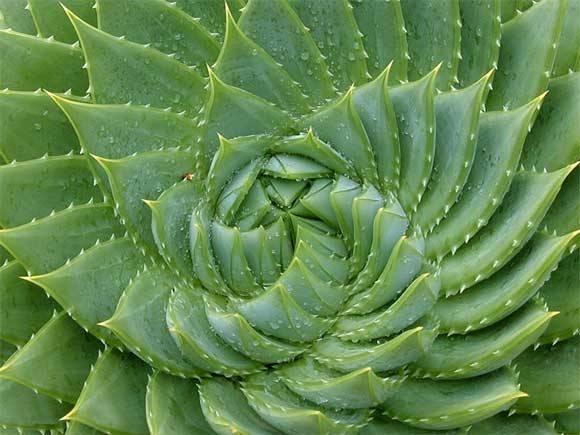 piante grasse tipi