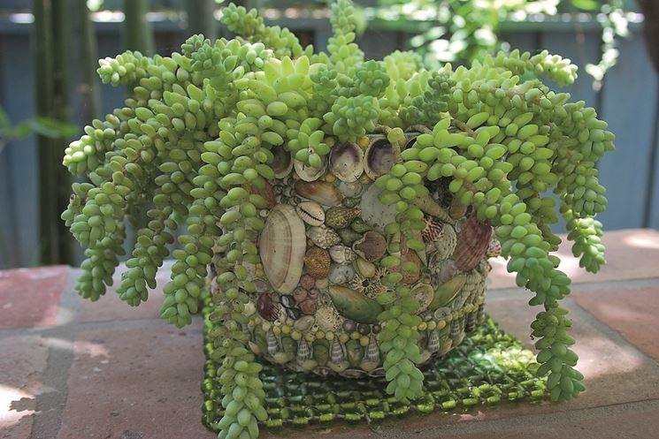 Piante succulente una cascata di sedum piante grasse - Piante grasse da esterno pendenti ...