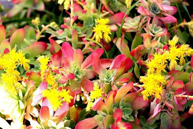 Composizioni piante grasse ricadenti