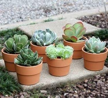 Vasi piante grasse piante grasse for Vasi per piante