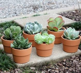Vasi piante grasse piante grasse - Vasi per piante grasse ...