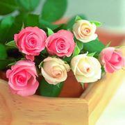 colori delle rose