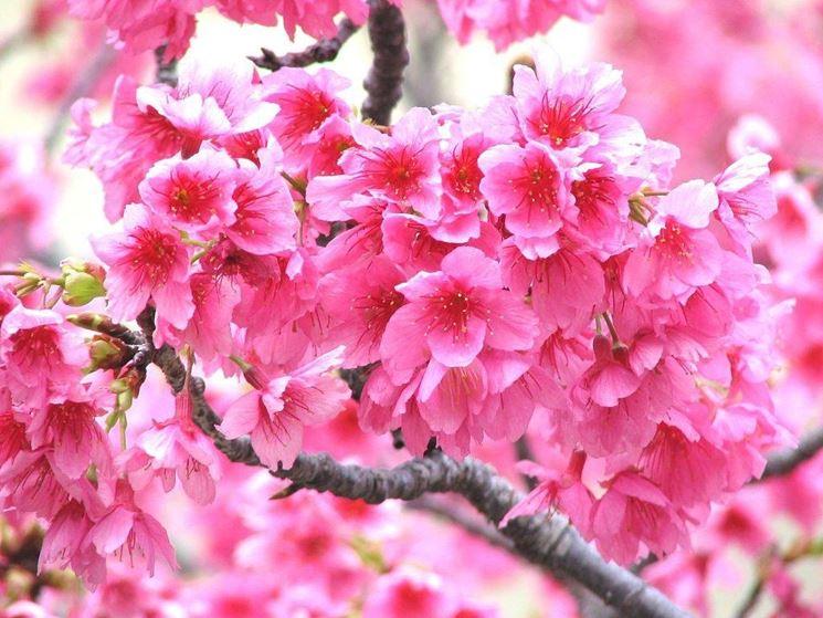 Fiori e frutti speciali fiori e frutti speciali sul for Piante da frutto che resistono al freddo