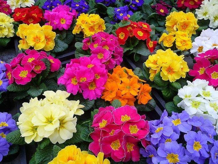 lavori di primavera