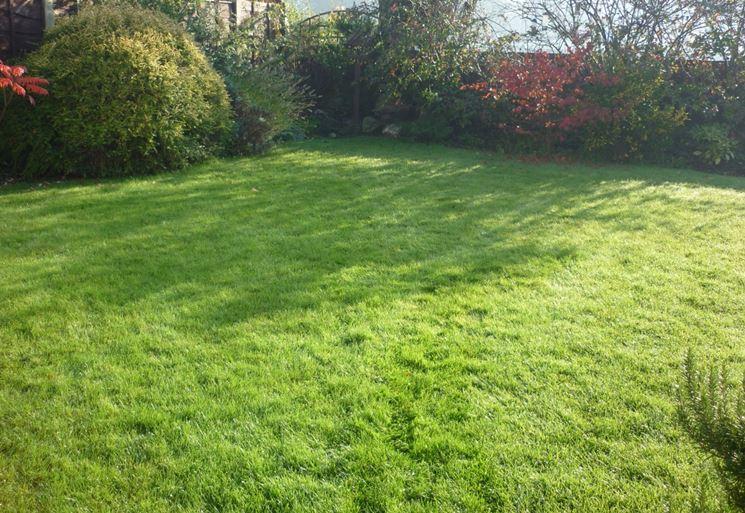 Rigenerare il prato speciali - Quando seminare erba giardino ...
