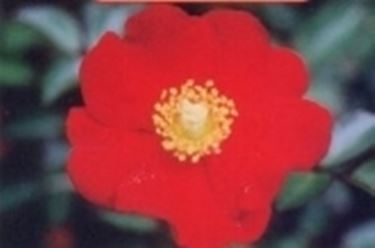 Variet rose speciali for Avvitatore a batteria quale scegliere