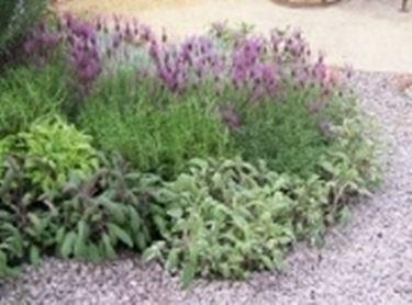 piante autunnali