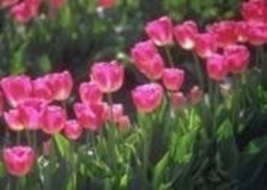 seminare fiori